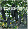 Семена огурца Лютояр F1 (250семян) Yuksel, Турция
