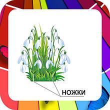 Декорації: квіти, гриби