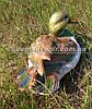 Садовая фигура Утка декоративная, фото 3
