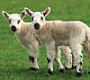 Электропастух для овец. Комплект для установки, фото 6