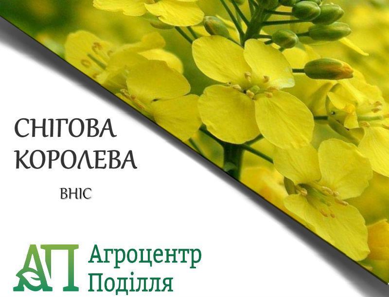 Рапс озимый  СНЕЖНАЯ КОРОЛЕВА 300-305 дн. бесплатная доставка урожай 2020 г.