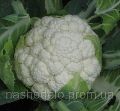 Семена цветной капусты Сеул F1 1000 семян Hazera