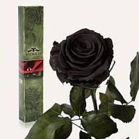 неувядающая роза Черный Бриллиант 5 карат на коротком