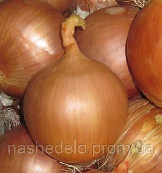 Семена лука репчатого Фронтино F1 250 000 семян Hazera