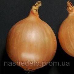 Семена лука репчатого Дормо F1 250 000 семян Hazera