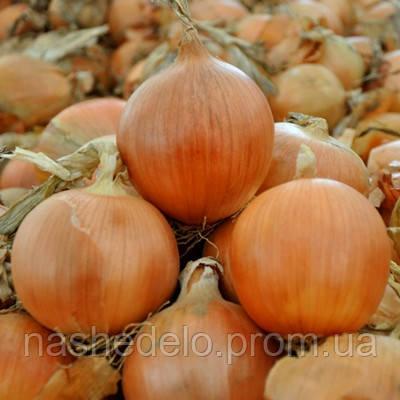 Семена лука репчатого Витало F1 250 000 семян Hazera