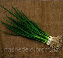 Савел 50 000 сем. лук на перо Никерсон (Хазера) (Робот)