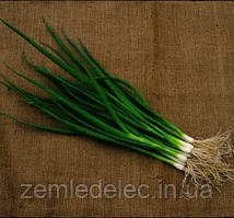 Семена лука на перо Савел 50 000 семян Hazera