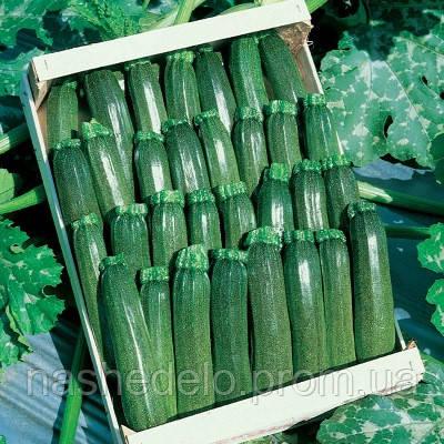 Семена кабачка-цуккини Аниса F1 1000 семян Hazera