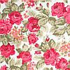 Розы 1 коралл
