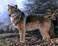 """VP 346 """"Волк в осеннем лесу"""" Роспись по номерам на холсте 40х50см"""