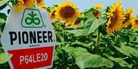 Семена подсолнечника Pioneer P64LE20