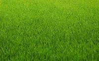 Декоративный газон от 5 кг