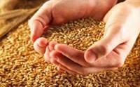 Автоматизированная система управления технологическим процессом сушки зерна в потоке