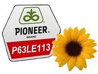 Семена подсолнечника Pioneer P63LE113, фото 1