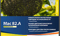 Семена подсолнечника Maїsadour MAS 82.A
