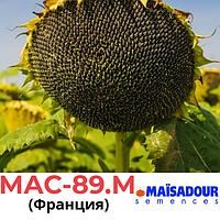 Семена подсолнечника Maїsadour Mas 89.M