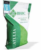 Семена подсолнечника Атилла ВНИС 2020