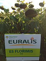 Семена подсолнечника Евралис Флоримис ЕС