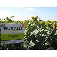 Семена подсолнечника Евралис Савана, фото 1