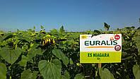 Семена подсолнечника Евралис Ниагара, фото 1