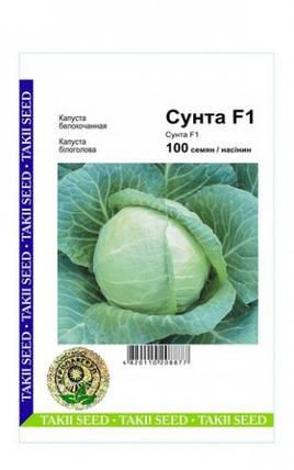 СУНТА F1 / SUNTA F1, 100 семян — капуста белокочанная, Takii Seeds, фото 2