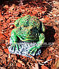 Садова фігура Жаба болотяна, фото 4