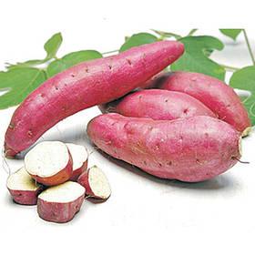 Маточные клубни Батата и на Еду (сладкий картофель)