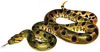 Эта удивительная кожа змей