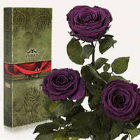 Три долгосвежих розы Фиолетовый аметист в подарочной упаковке (не вянут от 6 месяцев до 5 лет)