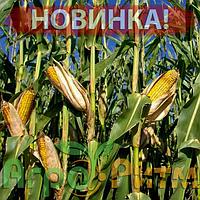 Кукурудза Симона