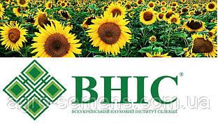 Семена подсолнуха Украинское солнышко ВНИС