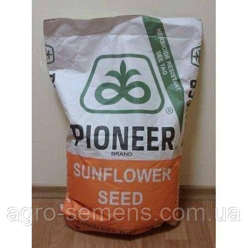 Семена подсолнечника Пионер П64ЛЕ99