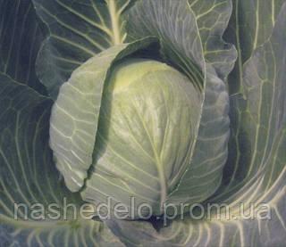 Семена капусты б/к Кастелло F1 2500 семян (калибр.) Hazera