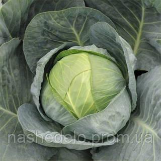 Семена капусты б/к Адсон F1 2500 семян (калибр.) Hazera