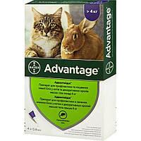 Bayer Advantage (Байер) Адвантейдж 80 - для кошек свыше 4 кг цена за 1 шт