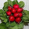 Семена редиса Диего F1 25 000 семян Hazera