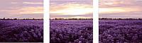 Картины по номерам 50х150 см. Триптих Лавандовое поле