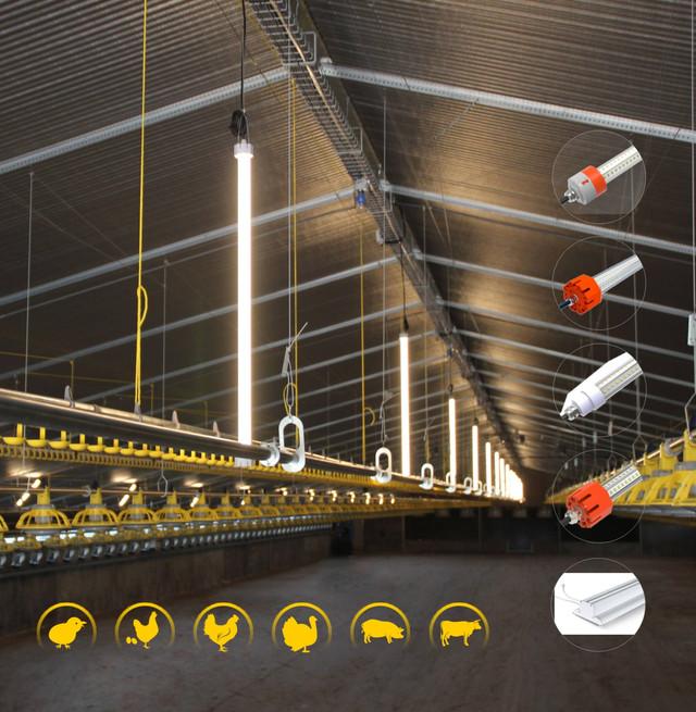 Светодиодное освещение для птичников, птицефабрик/ светильники для птичников и птицефабрик  - Космос Лайтинг Украина