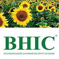 Семена кукурузы ВНИС Украина