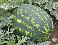 Семена арбуза Варда F1 1000 семян Hazera