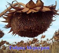 Насіння соняшника Меркурій OR Стандарт Гермес (Семена подсолнуха Меркурий OR)