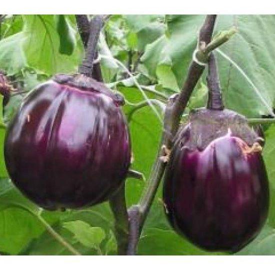 Семена баклажана  Виолетта (5 г)