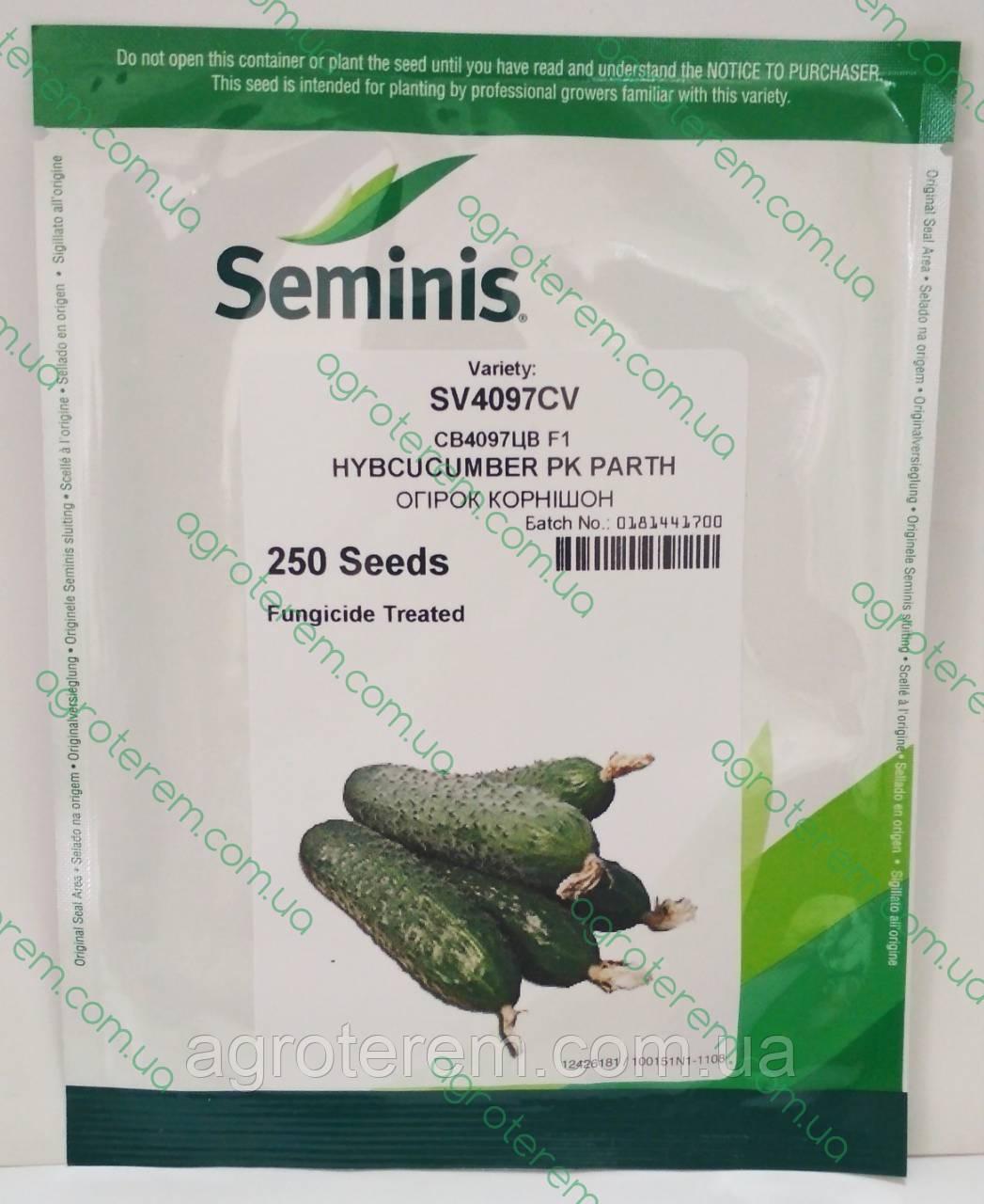 Семена огурца SV 4097 CV F1 250 c