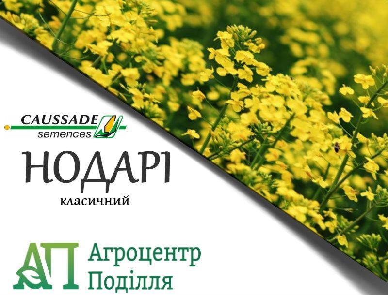 Рапс озимый НОДАРИ КС 305 дн. КОССАД СЕМАНС