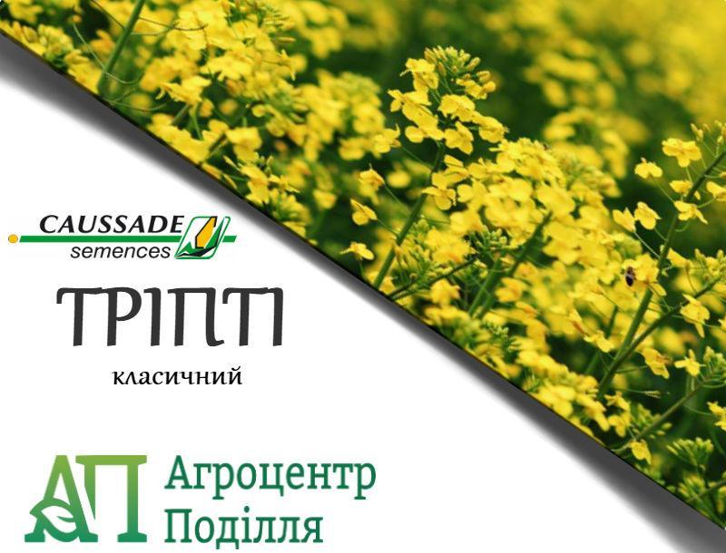 Рапс озимый ТРИПТИ КС 305-310 дн. КОССАД СЕМАНС