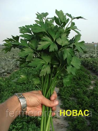 Семена петрушки Новас \ Novas 250 грамм  Clause