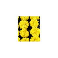 Семена Бархатцы американские Чикаго Еллоу Yellow 500 семян Kitano Seeds