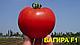 Семена томата Багира F1 Clause 5 грамм, фото 2