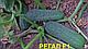 Семена огурца Регал F1 100 гр. Clause , фото 2